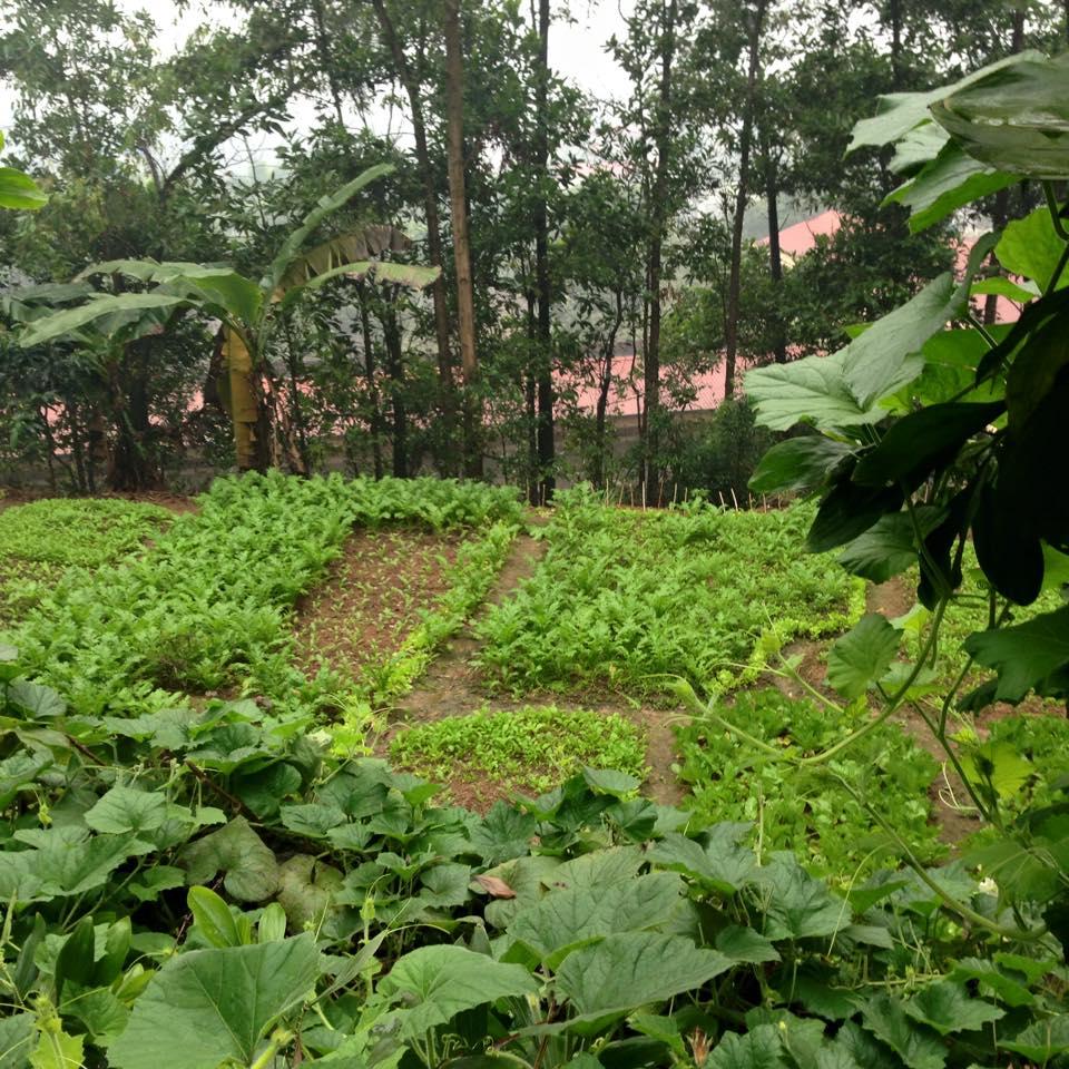 Rau sạch tại Quang Huy